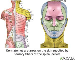 Nerve Dermatomes